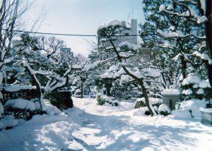 ギャラリー・冬