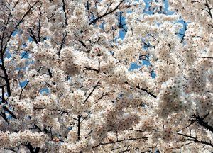 ギャラリー・春